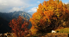 Catch Yading's Autumnal Hues before They are Gone