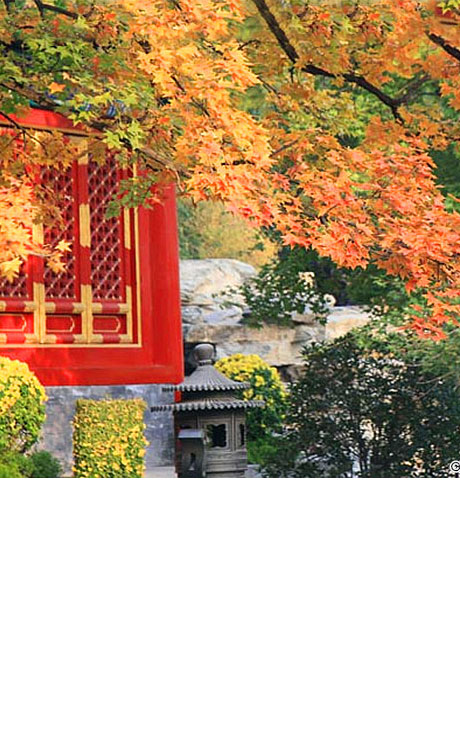 Enjoy golden Beijing autumn