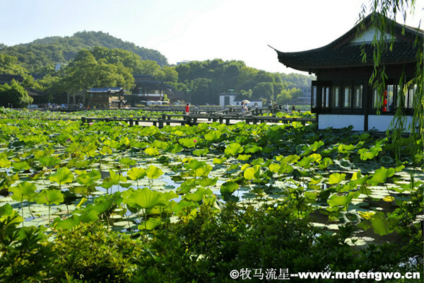The-Lotus-in-the-Breeze-at-Crooked-Courtyard1.jpg