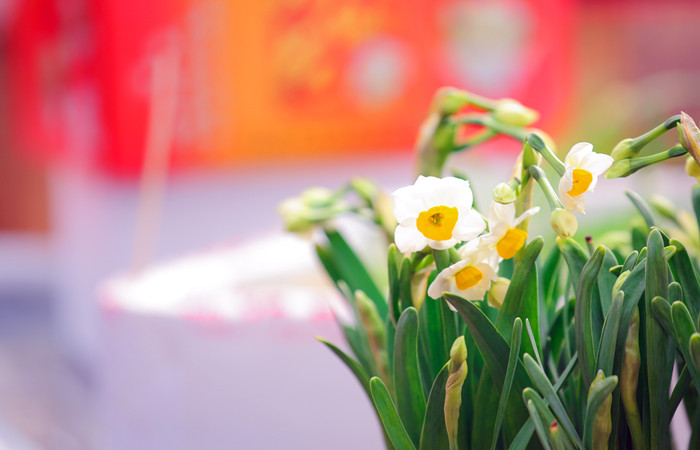 Chinese-New-Year-Flowers.jpg