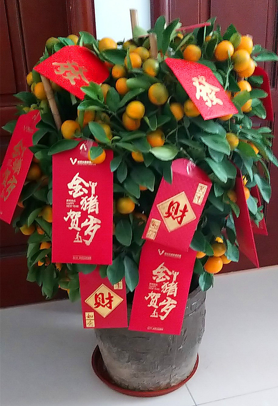 Kumquat-Tree-Chinese-New-Year.jpg
