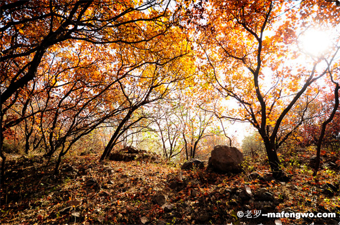 The-Natural-Yingshan-Forest-Park-2.png