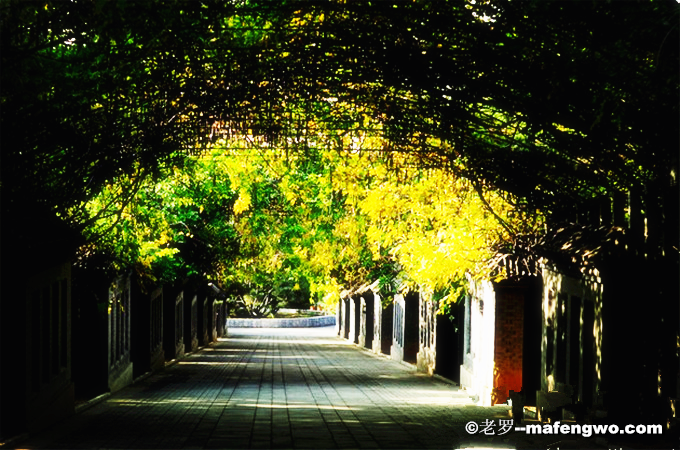 The-Natural-Yingshan-Forest-Park-3.png
